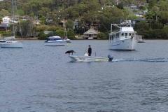 Hund auf einem Motorboot
