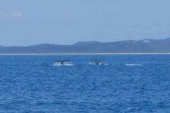 Wale tauchen ab