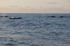Walfamilie neben uns