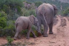 14. Elefantenkuh mit Nachwuchs