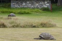 9 Die Schildkröten im Garten