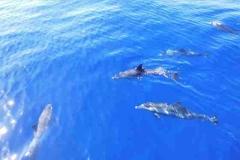 die Haut der Delphine ist gefleckt