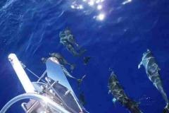 die Delphine kommen